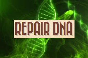 hemppy-hemp-dna-repair